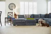 Girl using digital tablet on sofa in living room, dog behind her