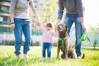 Mid adult couple holding hands with toddler daughter in park