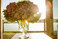 Hydrangea flowers in glass vase in front of window 11015268285| 写真素材・ストックフォト・画像・イラスト素材|アマナイメージズ
