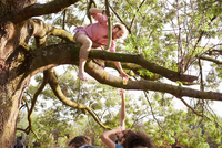 Young men handing drink to friend in tree at sunset park party