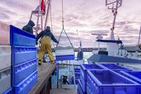 Fishermen unloading fish from trawler at dusk 11015269081| 写真素材・ストックフォト・画像・イラスト素材|アマナイメージズ