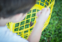 High level over shoulder view of boy holding toad in yellow plastic basket