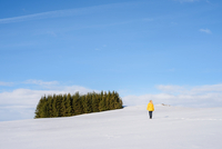 Woman walking towards row of fir trees, Miklaholt, Iceland