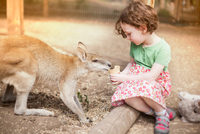 Girl sitting on log feeding kangaroo ice cream cone