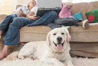 Family using laptop on couch, pet dog in foreground