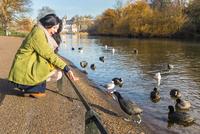 Young woman feeding ducks, St James's Park, London, UK
