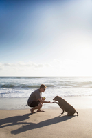 Mid adult man and dog on beach, man shaking hands with dog
