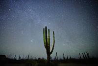 Cactus, La Paz, Baja California, Mexico