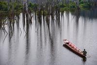 Man rowing boat through mangrove forest, Thakhek, Khammouane, Laos