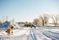 Golden retriever watching two young sisters walking to school bus on snow covered track, Ontario, Canada