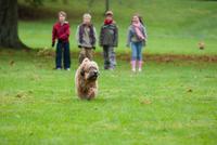 Dog running in park, four children standing in background 11015275913  写真素材・ストックフォト・画像・イラスト素材 アマナイメージズ