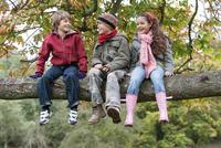 Three children sitting on tree branch, smiling 11015275915| 写真素材・ストックフォト・画像・イラスト素材|アマナイメージズ