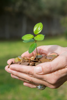 Side view of womans cupped hands holding tree seedling growing from coins