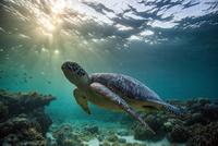 Rare green sea turtle (Chelonia Mydas), swimming in open ocean, Moalboal, Cebu, Philippines 11015276226| 写真素材・ストックフォト・画像・イラスト素材|アマナイメージズ