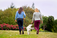 Two young women walking dog in park, rear view