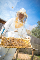 Portrait of beekeeper holding hive frame with bees