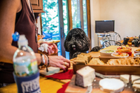 Pet dog watching woman preparing snacks at kitchen counter 11015276920  写真素材・ストックフォト・画像・イラスト素材 アマナイメージズ