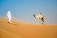 Middle eastern man wearing traditional clothes walking toward camel in desert, Dubai, United Arab Emirates