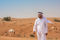Middle eastern man wearing traditional clothes walking away from camels in desert, Dubai, United Arab Emirates
