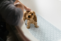 Man giving puppy bath in bathtub