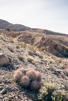 Gravelled desert landscape and cacti, Olancha, California, USA