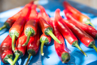 Medium group of fresh red chillies