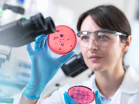 Scientist examining petri dish containing bacterial culture grown in laboratory