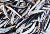 Traditional Italian food, overhead view of fresh anchovies, Campania, Italy