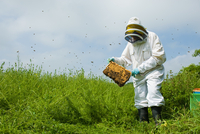 Beekeeper wearing protective clothing checking bee hive 11015286953| 写真素材・ストックフォト・画像・イラスト素材|アマナイメージズ