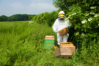 Beekeeper wearing protective clothing checking bee hive 11015286956| 写真素材・ストックフォト・画像・イラスト素材|アマナイメージズ