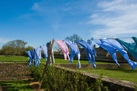 Shirts blowing on garden clothesline