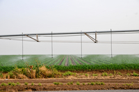 Mobile irrigation robot watering field
