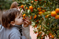 Mother and daughter smelling oranges on tree