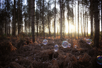 Bubbles floating in forest