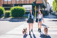 Two young women walking pit bull on pedestrian crossing in urban housing estate