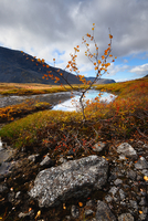 Autumn coloured valley at Malaya Belaya river, Khibiny mountains, Kola Peninsula, Russia