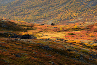 Autumn coloured valley near Malaya Belaya river, Khibiny mountains, Kola Peninsula, Russia