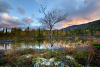 Landscape with autumn colours at Polygonal Lakes, Khibiny mountains, Kola Peninsula, Russia