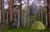 Bicycle and tent in forest
