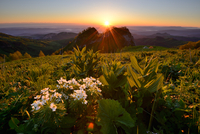 Wildflowers at dusk,  Bolshoy Thach (Big Thach) Nature Park, Caucasian Mountains, Republic of Adygea, Russia
