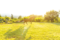Horse galloping in field landscape