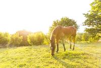 Horse grazing in field landscape