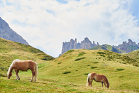 Scenic view of wild horses grazing in mountains, Austria