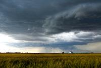 A storm over a golden wheat field threatens a farm and barn south of Tonkawa, Oklahoma 11015294362  写真素材・ストックフォト・画像・イラスト素材 アマナイメージズ