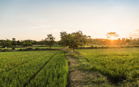 Green field landscape at sunset, Lombok, Indonesia