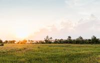 Field landscape at sunset, Lombok, Indonesia