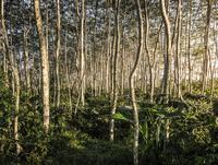 Forest view, Wana Giri, Bali, Indonesia