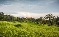 Green Jatiluwih rice terrace, Bali, Indonesia 11015294422| 写真素材・ストックフォト・画像・イラスト素材|アマナイメージズ