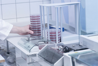 Scientist arranging petri dish with sample for testing