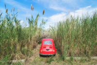 Car parked among long grass, Lipari, Aeolian Islands, Sicily, Italy